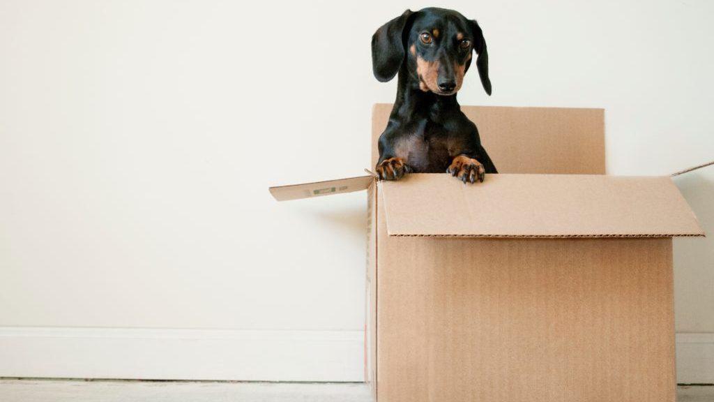 箱に入っている犬