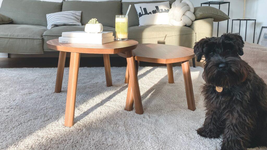 犬とテーブル